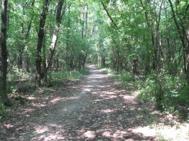 142167-deer-grove-forest-trail-running-feature